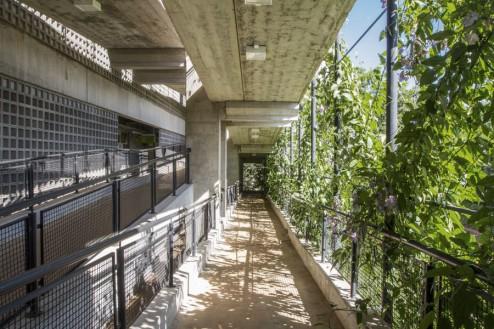 Photo promenade sur la façade ouest du bâtiment, Après une croissance de la vigne.